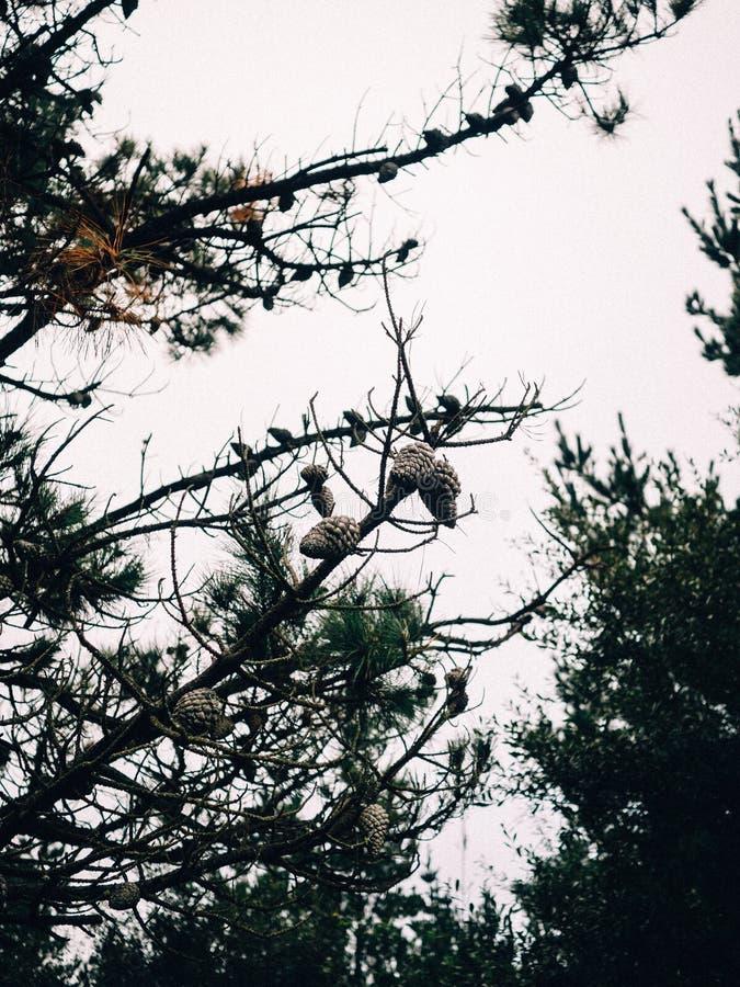 Árvores e pinhos na floresta e na montanha foto de stock royalty free