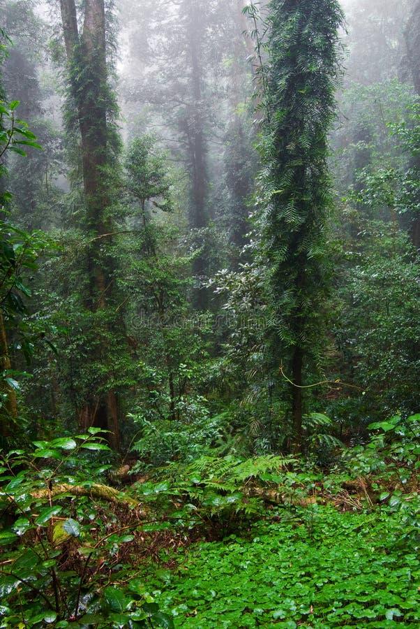 Árvores e plantas da floresta tropical fotografia de stock royalty free