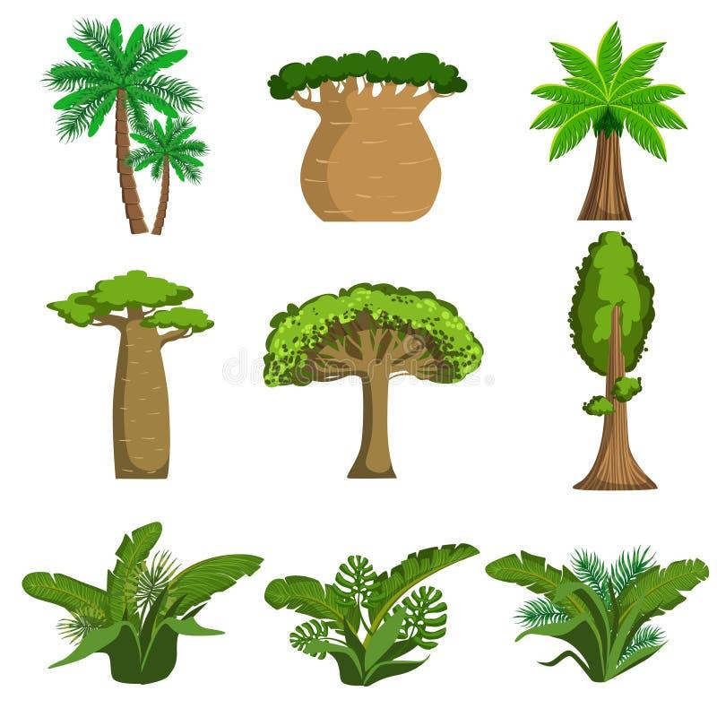 Árvores e plantas da selva ajustadas ilustração do vetor