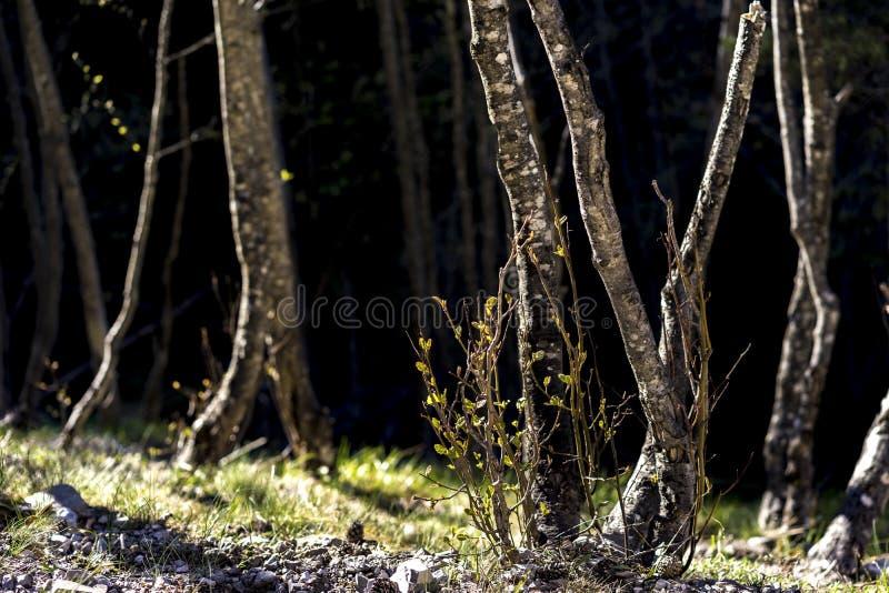 Árvores e plantas pequenas em Sunny Forest imagem de stock