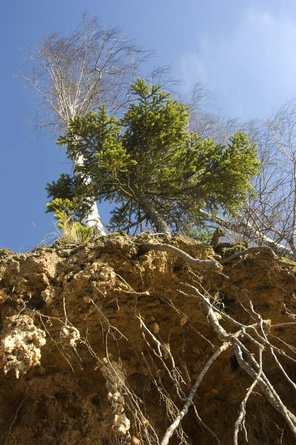 Árvores e raizes fotos de stock royalty free