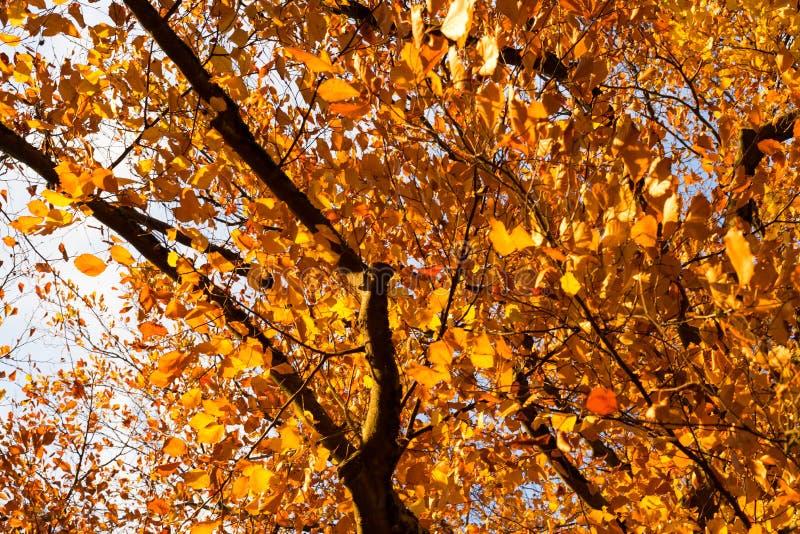 árvores e ramos da cor do por do sol do outono fotos de stock royalty free