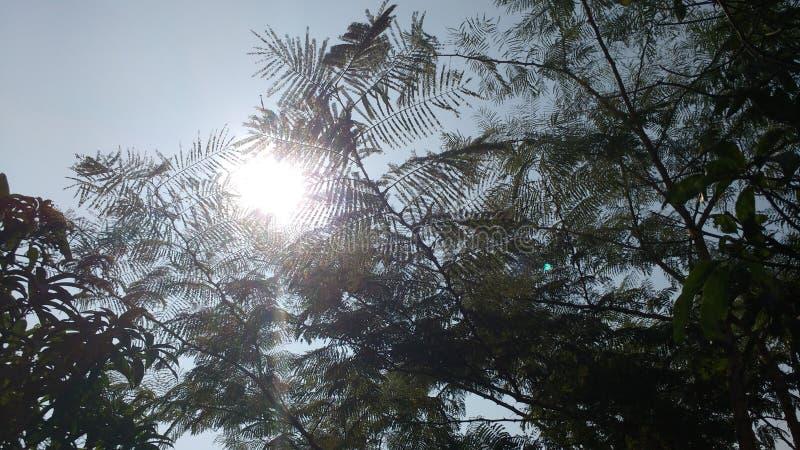 Árvores e ramos da natureza fotografia de stock royalty free