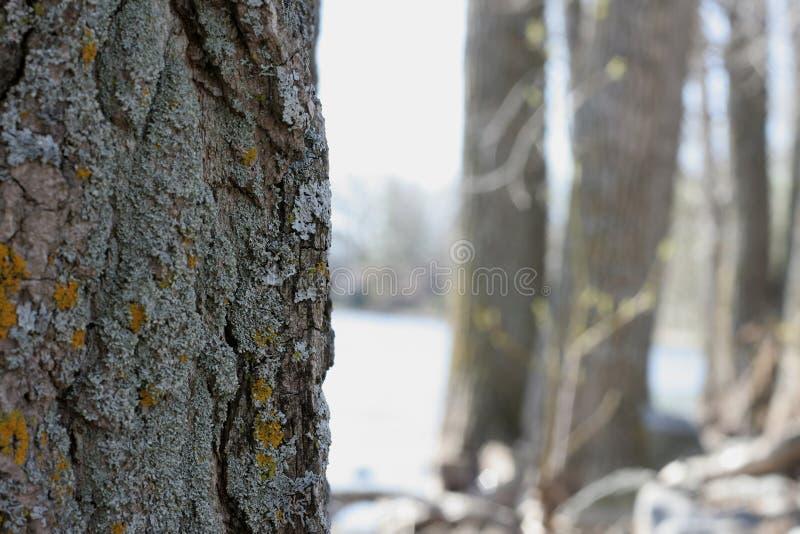 Árvores e rio foto de stock