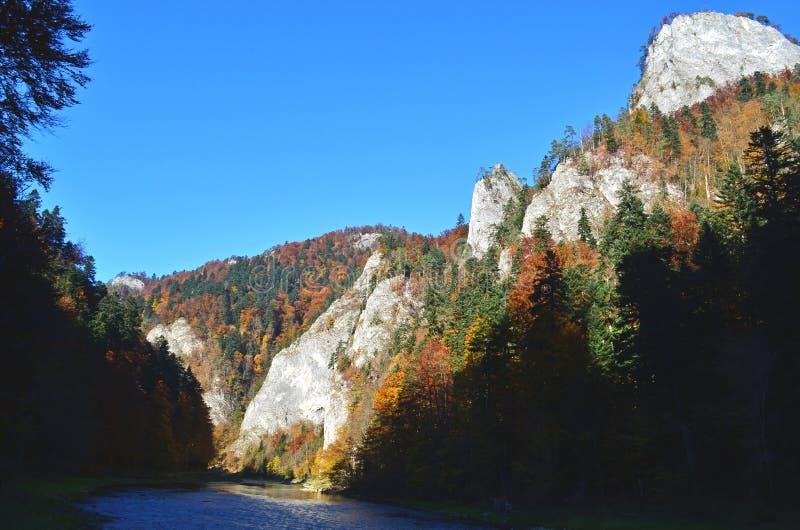 Árvores e rochas do outono ao lado do rio de Dunajec no parque nacional de Pieniny, Eslováquia foto de stock