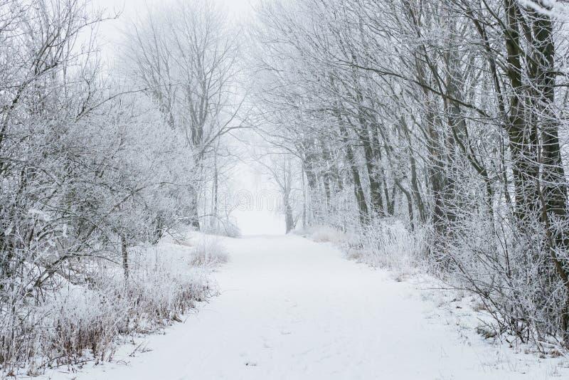 Árvores e trajeto congelados na neve imagem de stock