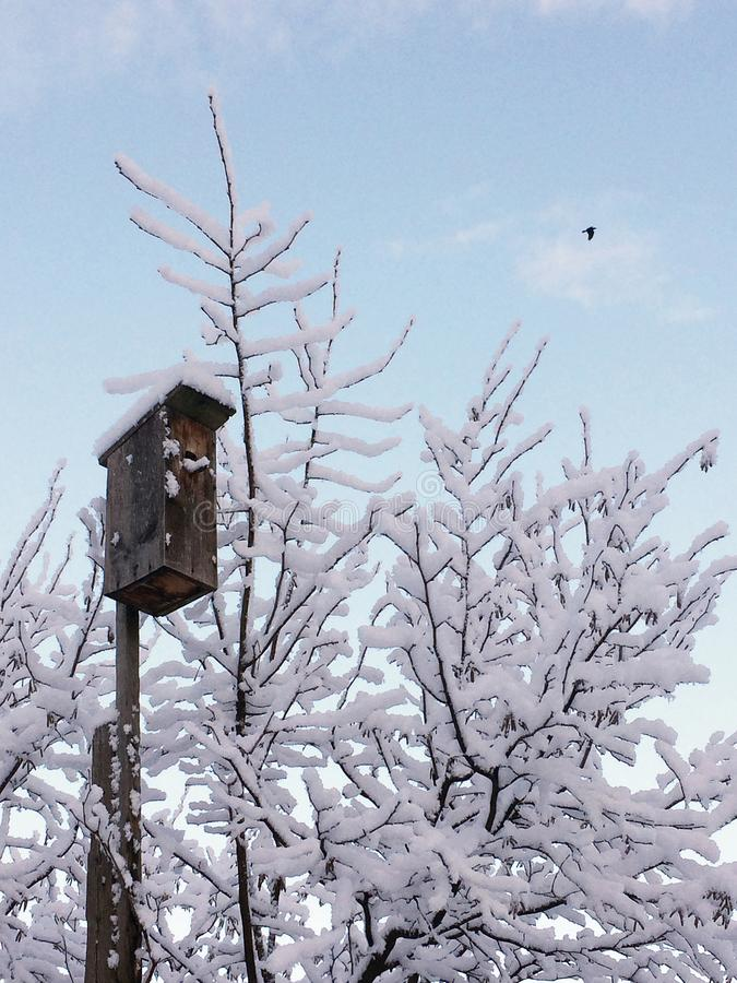 Árvores e um aviário coberto com os flocos da neve após uma queda de neve, amanhecer foto de stock