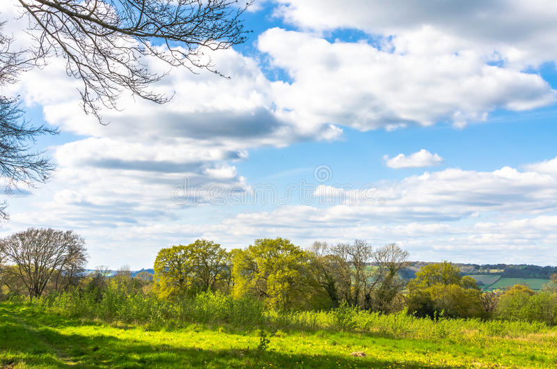 Árvores e um prado como as molas da natureza à vida fotos de stock royalty free