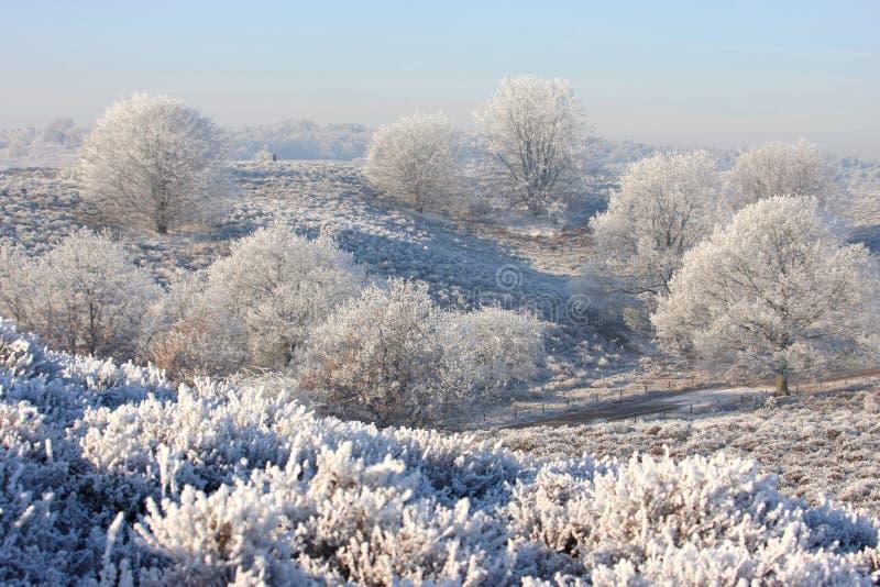 Árvores em cima dos montes brancos imagem de stock
