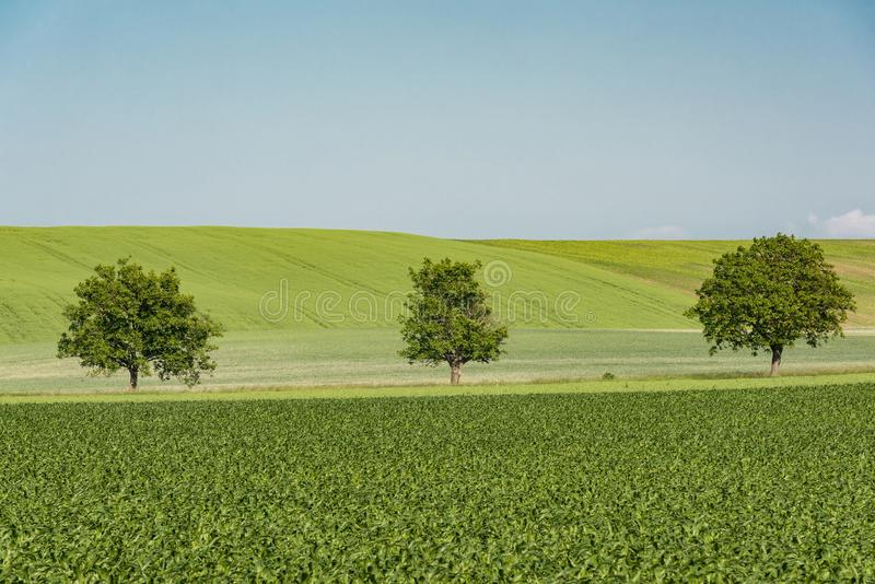 Árvores em cultivar Rolling Hills na região de Checo Moravia imagens de stock