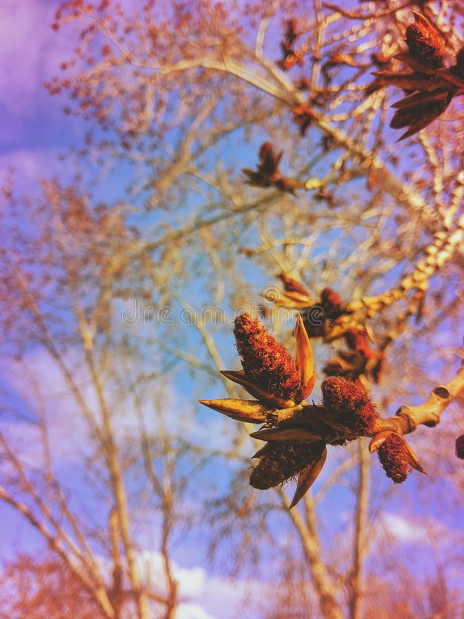 Árvores em flor para a primavera foto de stock