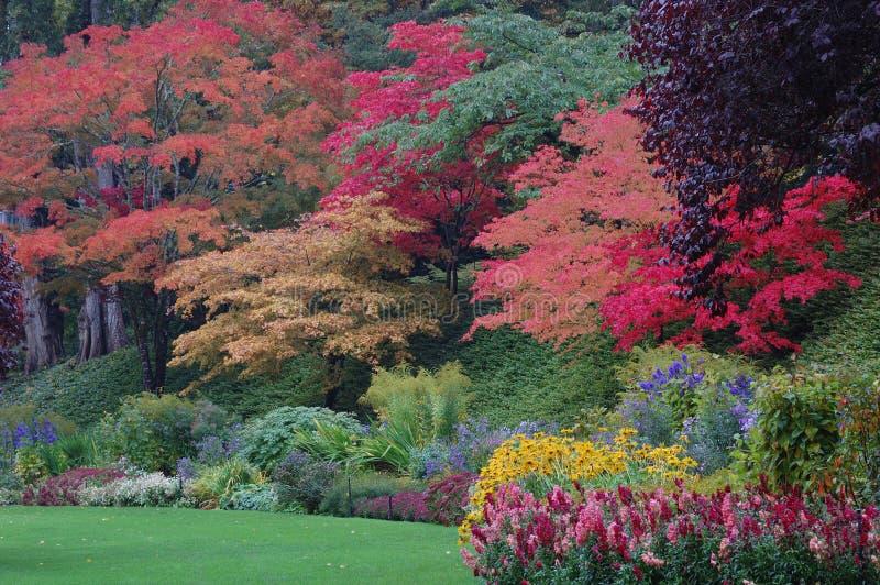 Árvores em jardins de Butchart foto de stock royalty free