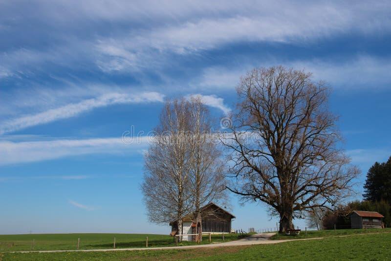 Árvores em outubro imagem de stock