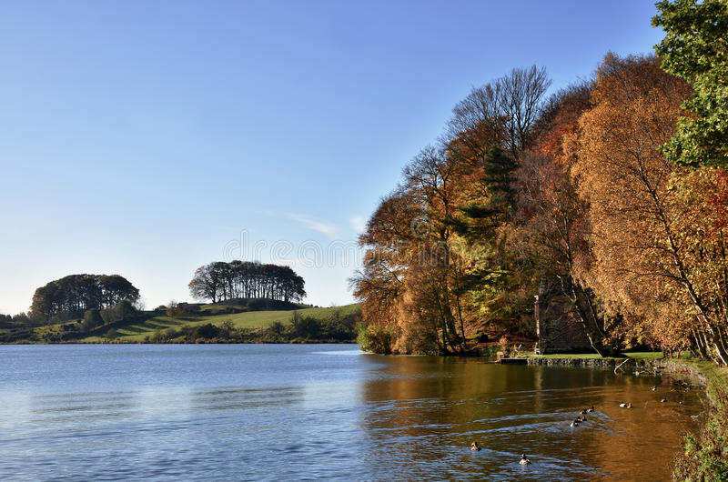 Árvores em Talkin Tarn, em um dia do outono. fotografia de stock