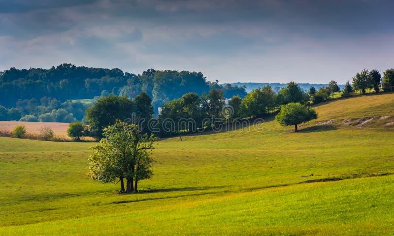 Árvores em um campo no Condado de York rural, Pensilvânia fotografia de stock royalty free