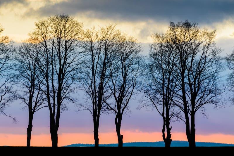 Árvores em um fundo de nuvens coloridas fotografia de stock royalty free