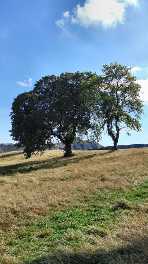 Árvores em um monte foto de stock