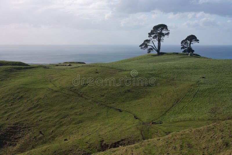 Árvores em um monte verde, com o mar no fundo em montes de Papamoa perto de Te Puke e de Tauranga na ilha norte em novo imagem de stock royalty free