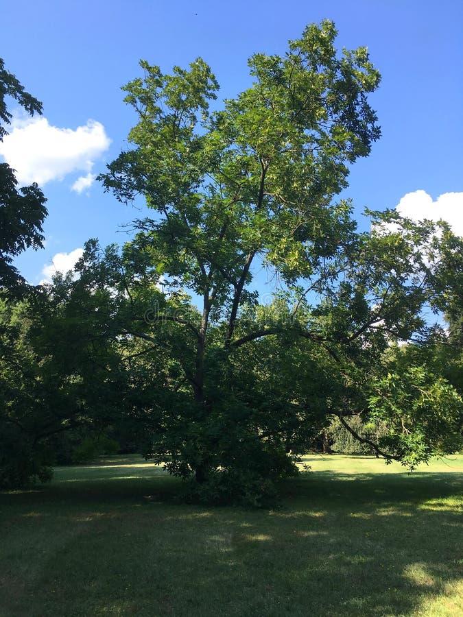 Árvores em um parque enorme fotos de stock royalty free