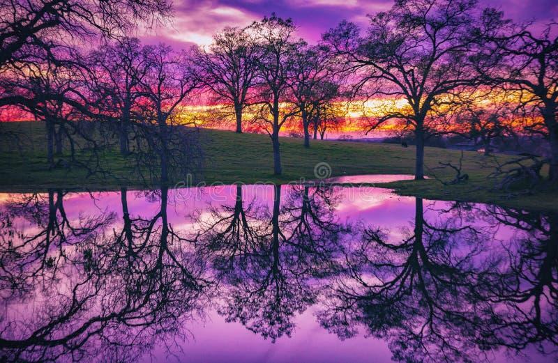 Árvores em um por do sol refletido na água fotografia de stock