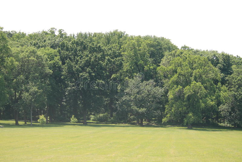 Árvores em um prado imagem de stock royalty free