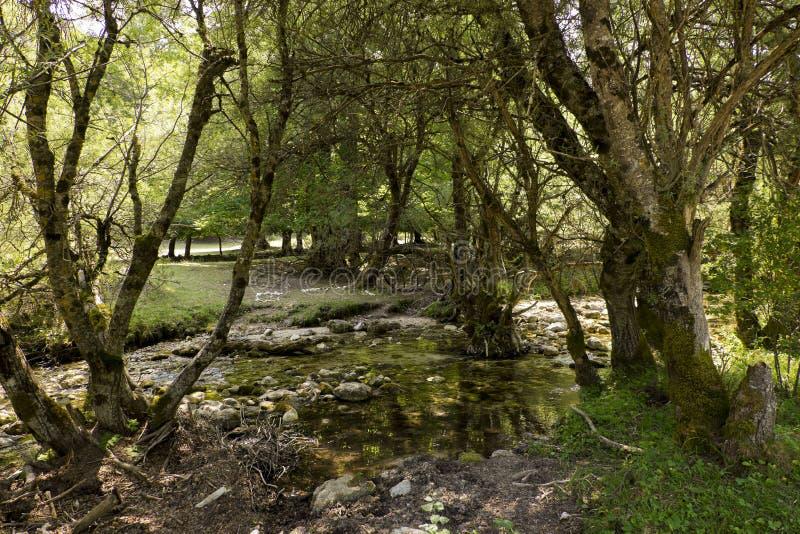 Árvores em um rio foto de stock