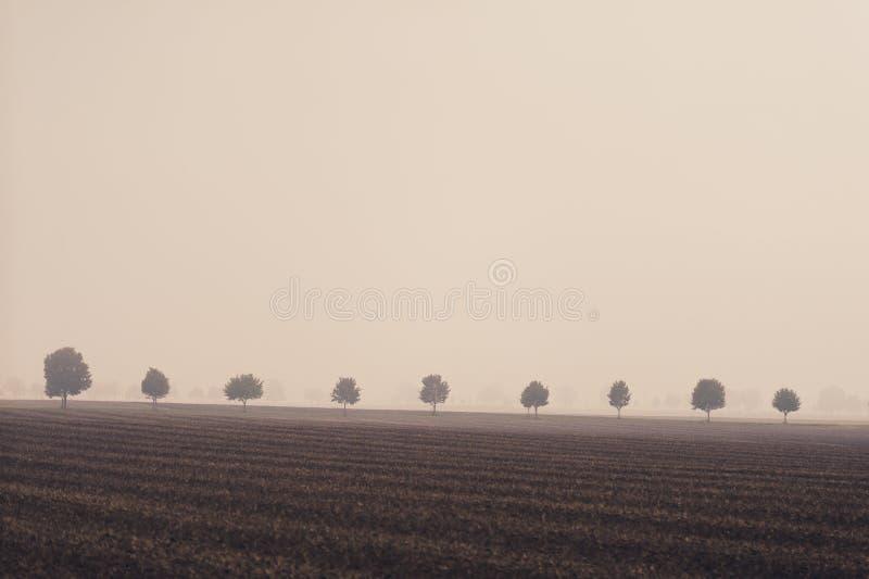 Árvores em uma fileira no campo imagens de stock royalty free