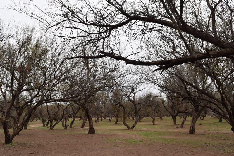Árvores em uma madeira escura imagens de stock