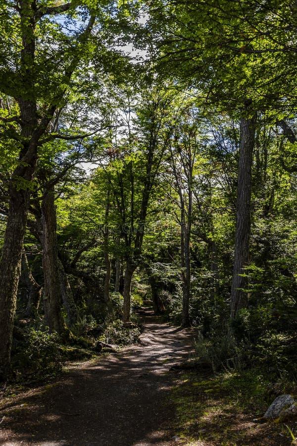 Árvores em Ushuaia, Tierra del Fuego, Argentina fotos de stock royalty free