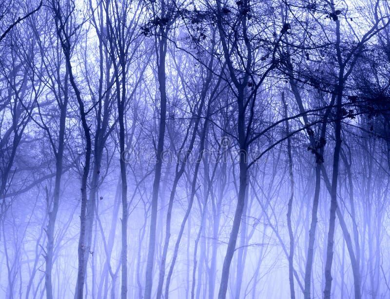 Árvores enevoadas fotografia de stock