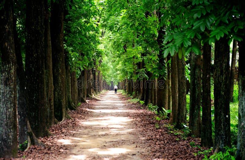 Árvores enormes imagem de stock