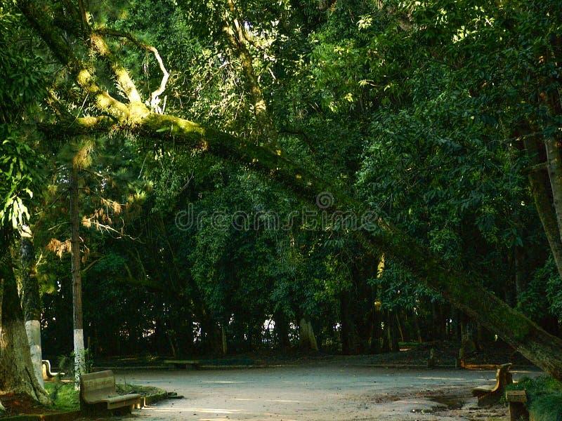 Árvores enormes no parque imagem de stock royalty free
