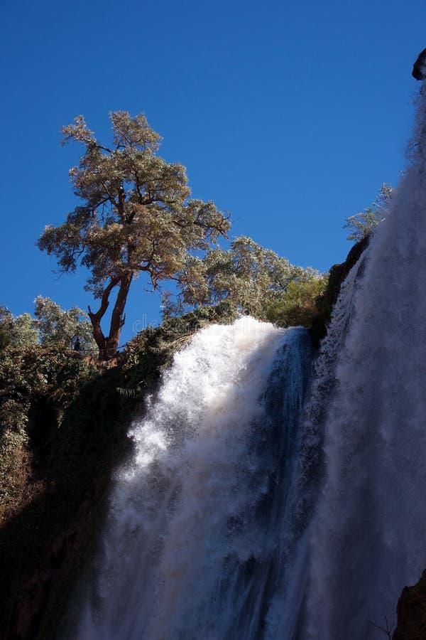 Árvores ensolarados na parte superior de uma cachoeira branca foto de stock