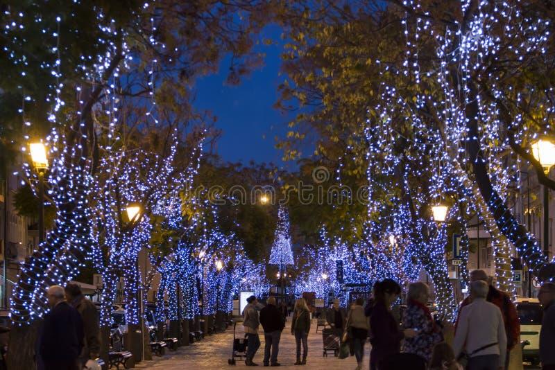 Árvores envolvidas Natal com luzes fotografia de stock