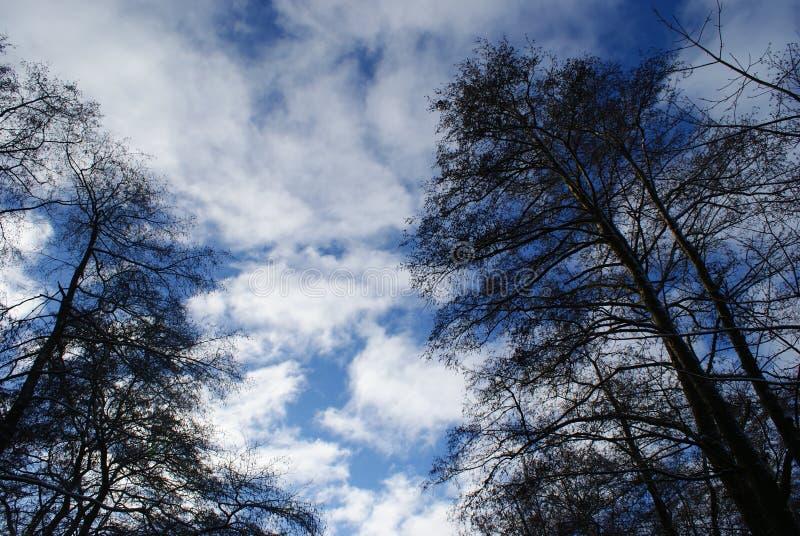 Árvores escuras no céu azul fotos de stock royalty free