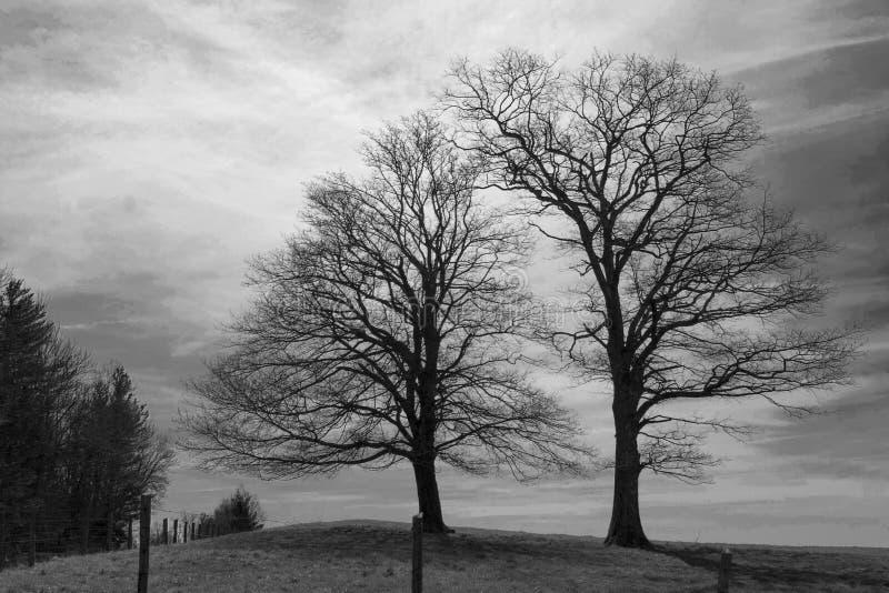 Árvores esplêndidos em um pasto fotos de stock royalty free