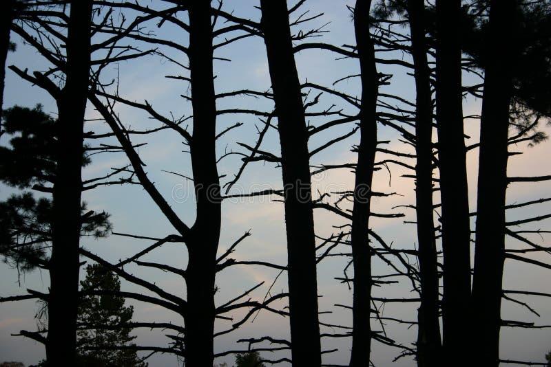 Árvores estéreis fotografia de stock royalty free