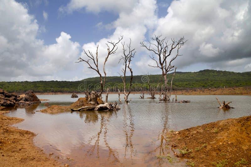 Árvores estéreis no lago foto de stock royalty free