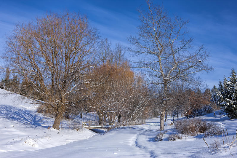 Árvores estéreis no parque nevado foto de stock