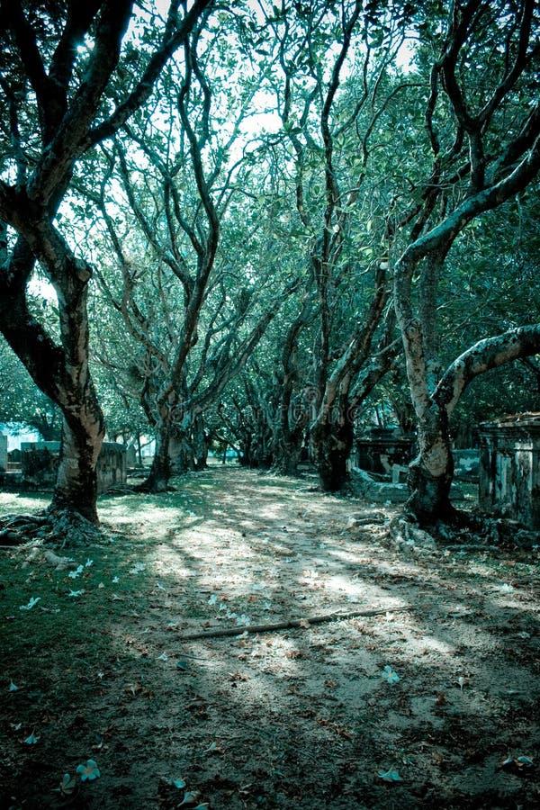 Árvores frescas do tom fotografia de stock