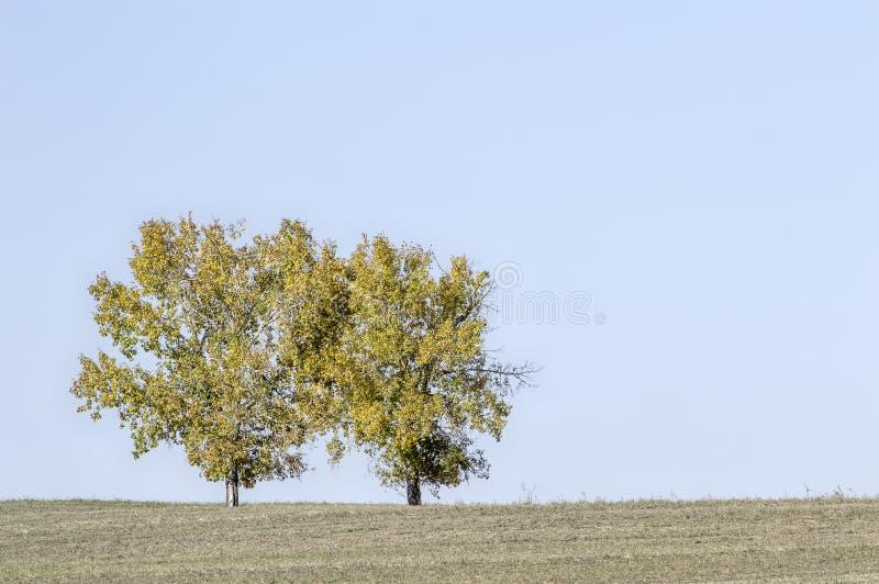 Árvores gêmeas encerradas na beleza dourada imagens de stock