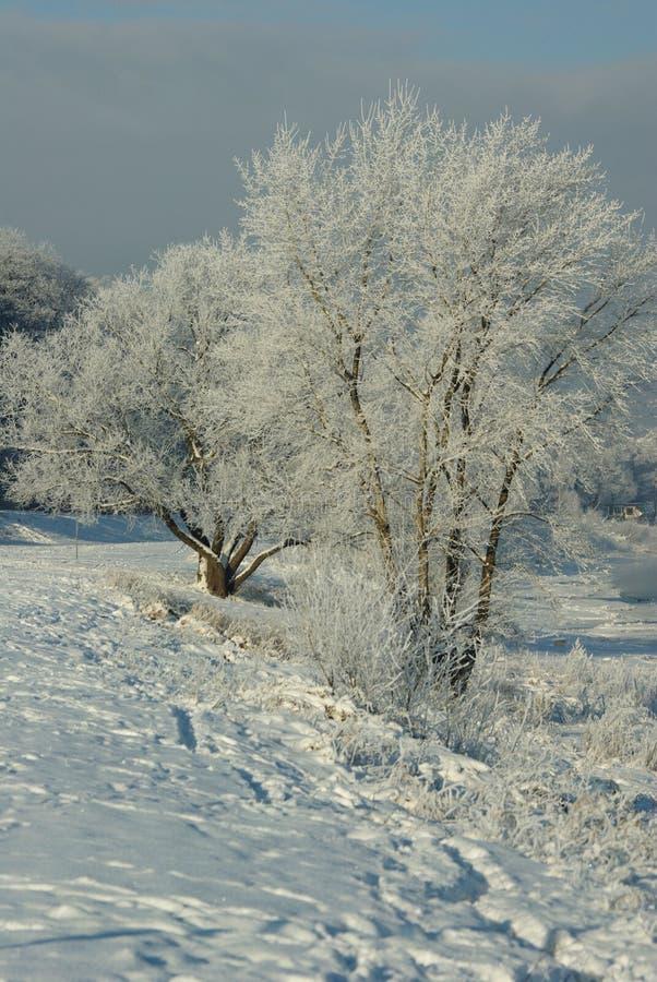 Download Árvores geadas foto de stock. Imagem de hoarfrost, dresden - 65577744