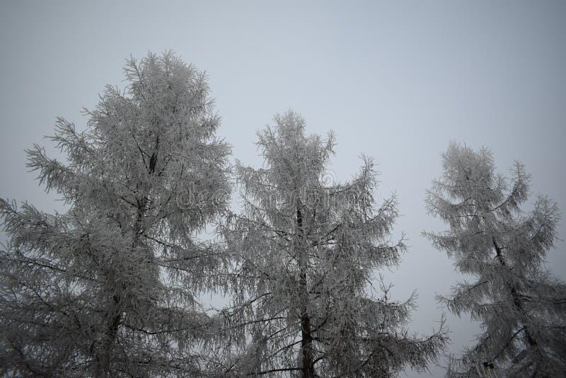 Árvores geladas imagens de stock