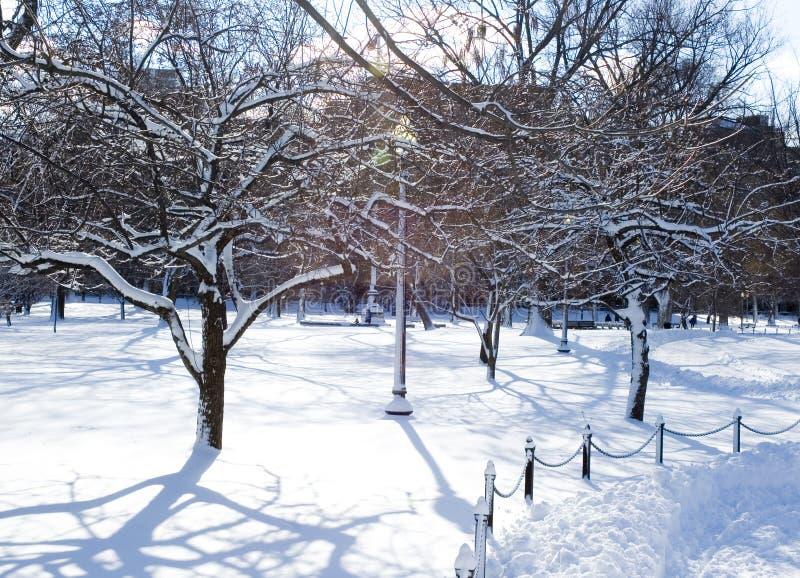 Árvores geladas no parque imagens de stock