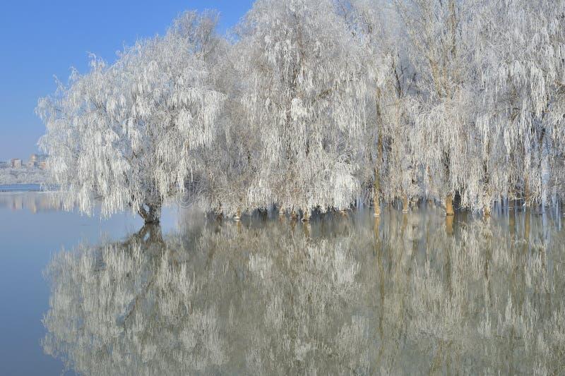 Árvores gelados do inverno imagens de stock