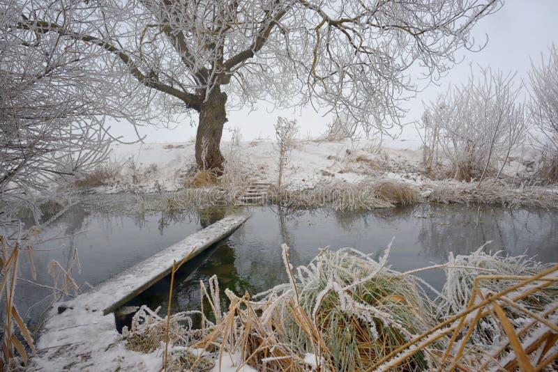 Árvores gelados e passadiço do inverno imagens de stock royalty free