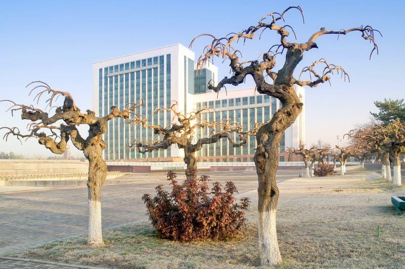 Árvores Gnarled fotos de stock