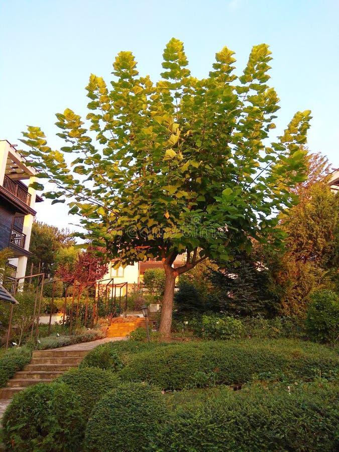 Árvores, grama e ar puro, jardim bonito do verão imagens de stock royalty free