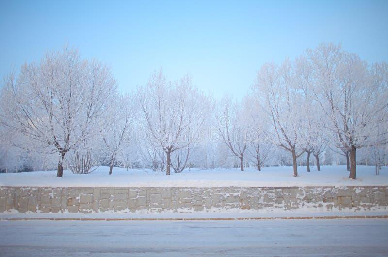 Árvores ideais do inverno Aleia com as árvores cobertas com a geada densa fotografia de stock royalty free