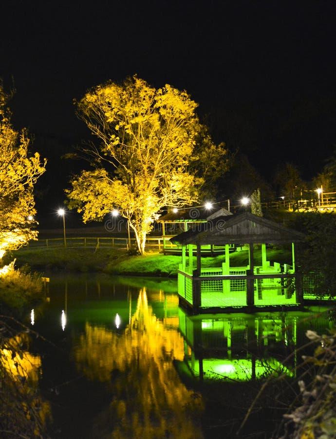 Árvores iluminadas e ponto de vista na noite imagens de stock